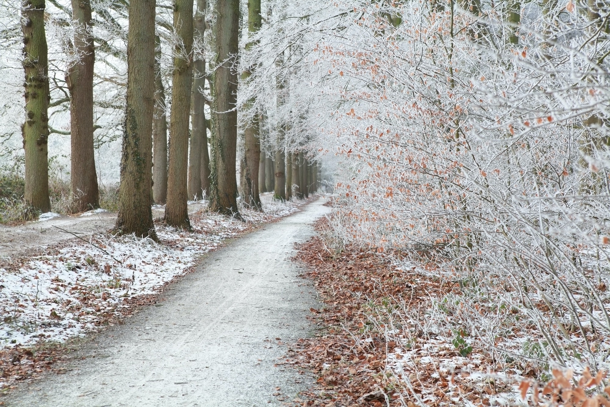 walk path in white frosty forest