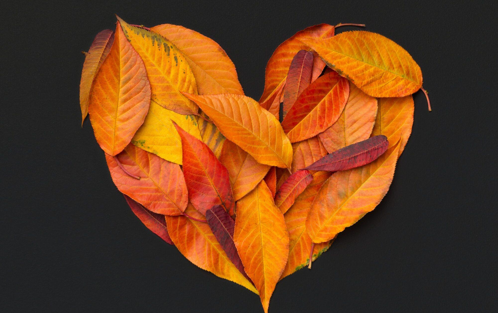 Heart of fallen bright leaves on chalkboard background
